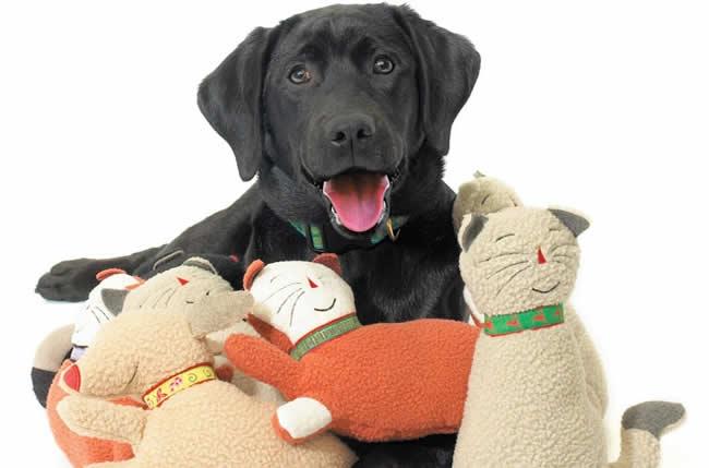 Des remèdes naturels pour lutter contre le stress du chien