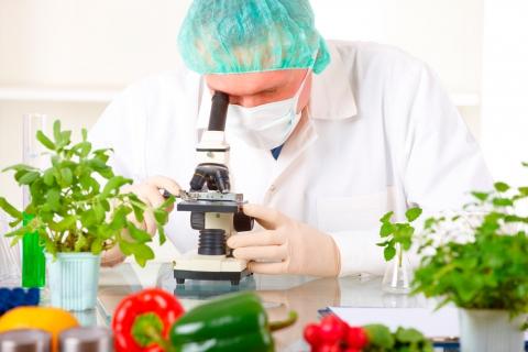 expert-secteur-agroalimentaire