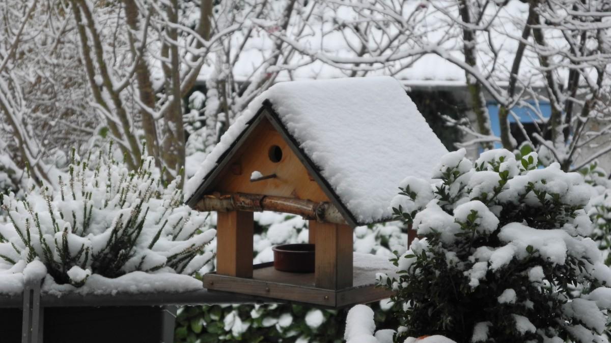 Le jardin en hiver: comment s'en occuper?