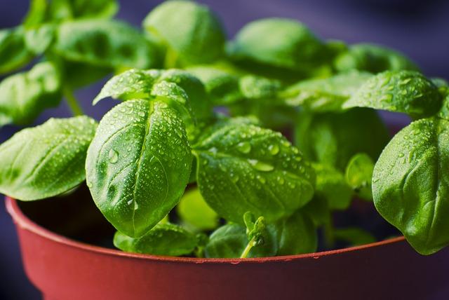 Ces 5 aromates qui vous veulent du bien