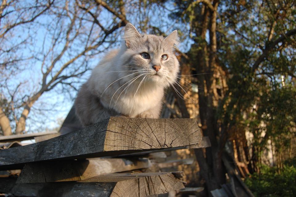 Protéger son jardin potager des chats de façon naturelle
