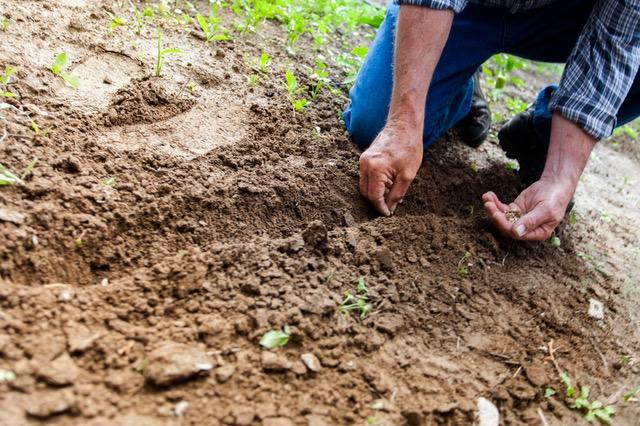 Quelques astuces pour se débarrasser définitivement de certains nuisibles du jardin