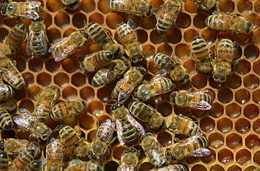 Propolis, gelée royale, miel : les bienfaits de l'apithérapie