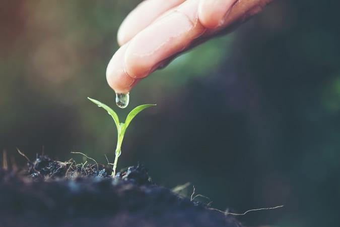 Idée bonsaï : euodiadanielli – L'arbre aux cent mille fleurs