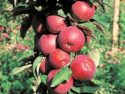 httpwww.vivons-nature.com-fruits