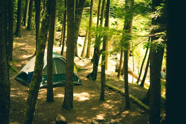 forêt camp