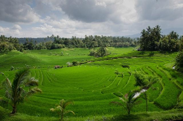 Un voyage écologique dans l'île de Bali