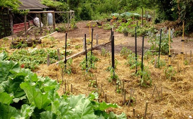 2 conseils à prendre en compte pour jardiner de manière écolo