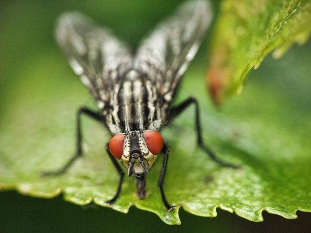 Quelques astuces naturelles pour repousser les mouches