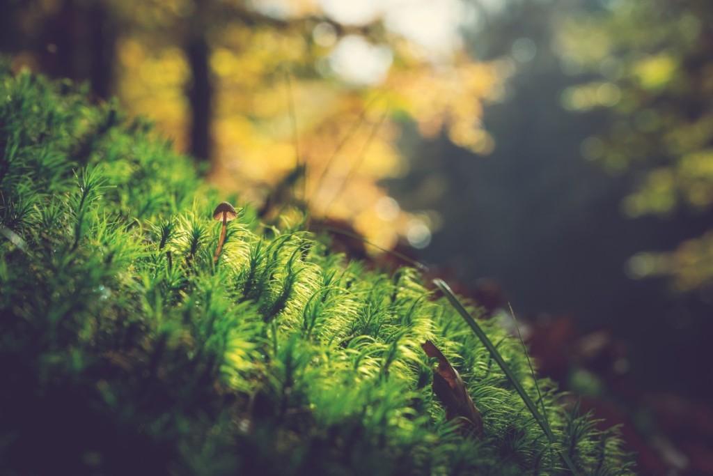 moss_mushroom_nature_forest_growth-1245