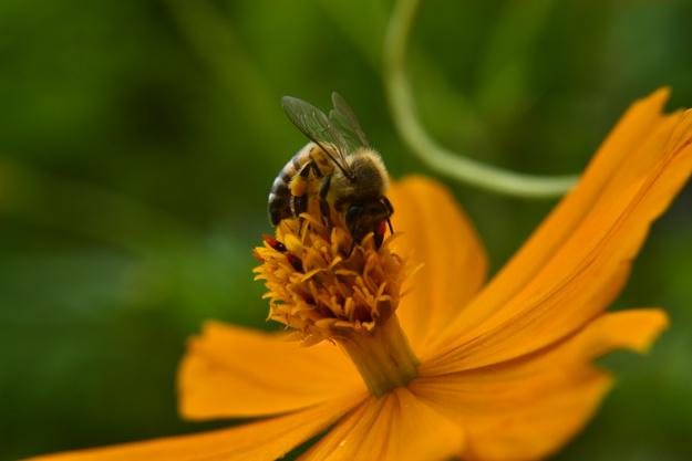parrainer abeilles
