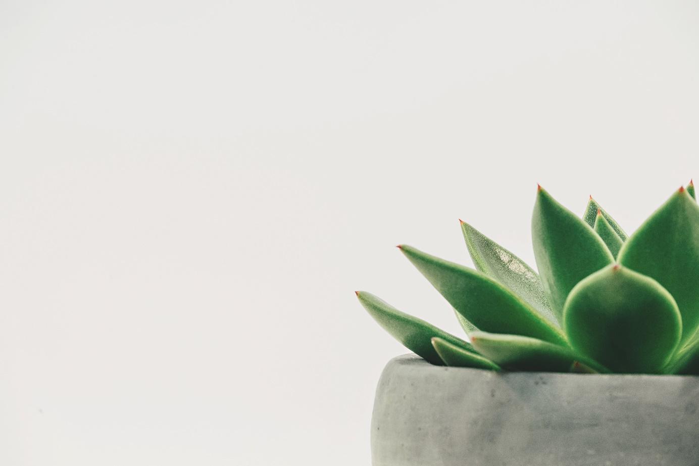 5 astuces bio et pas chères pour la maison