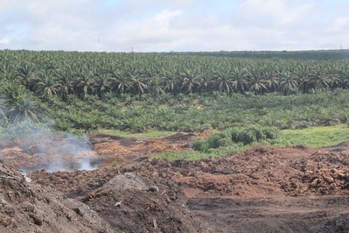 Pourquoi consommer des produits sans huile de palme ?
