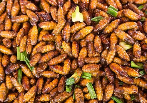 des insectes à consommer