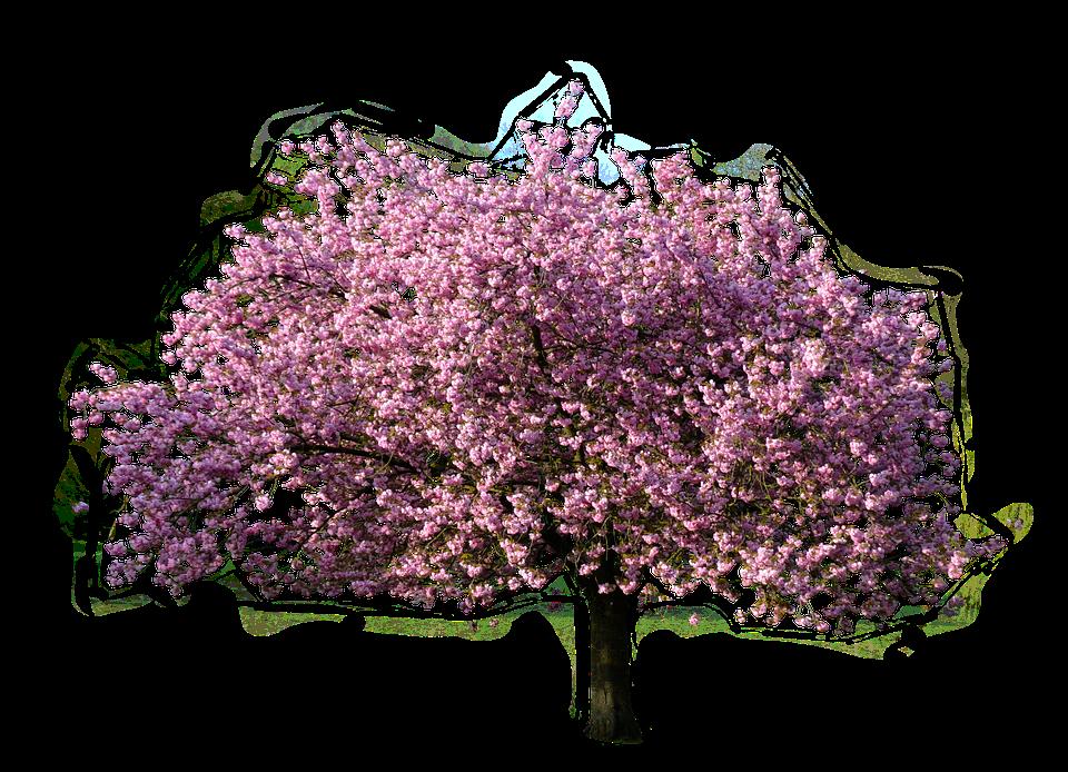 Quelles sont les maladies qui peuvent toucher les arbres?