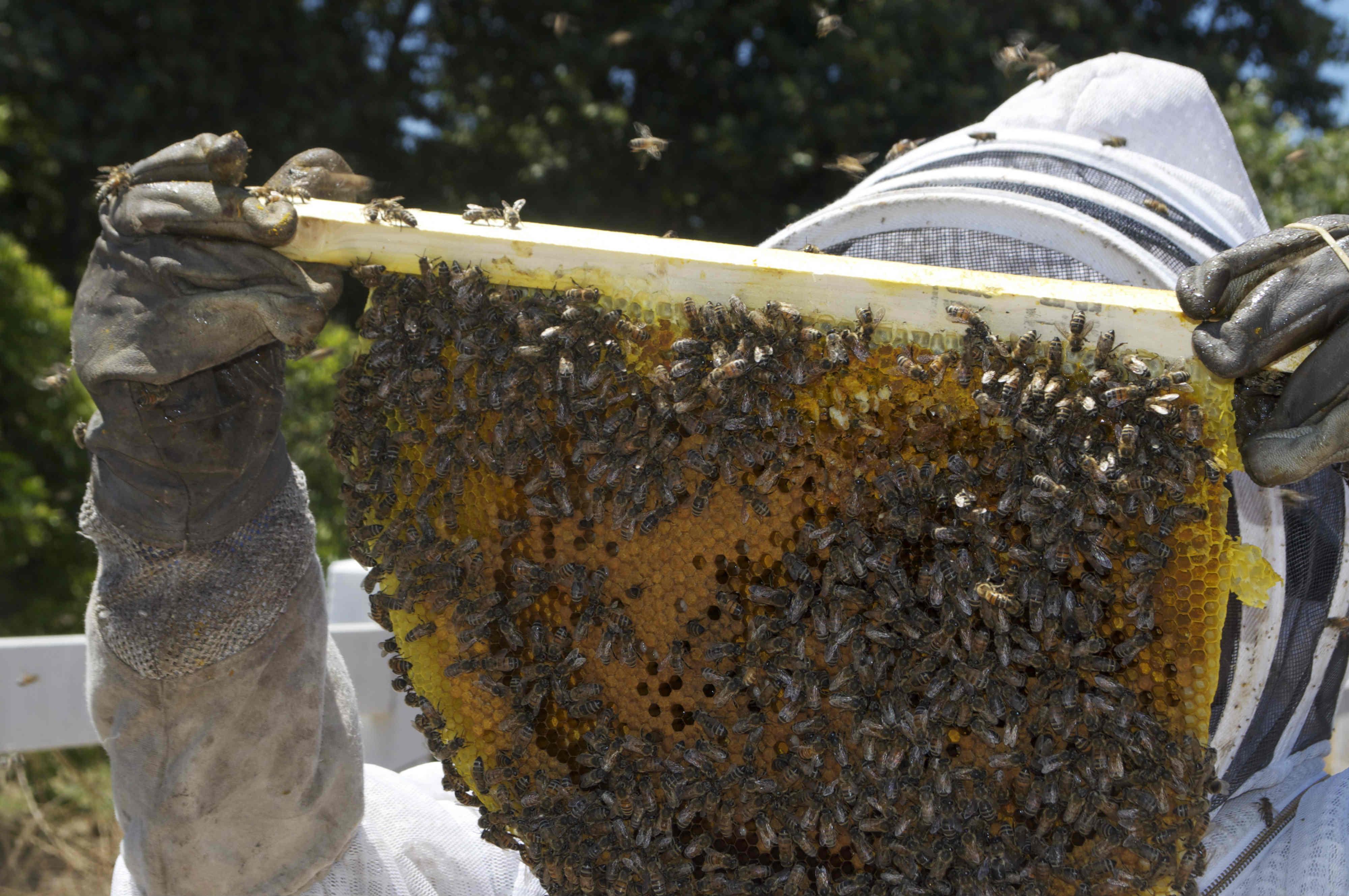 Découvrez la ruche kényane : une ruche écologique
