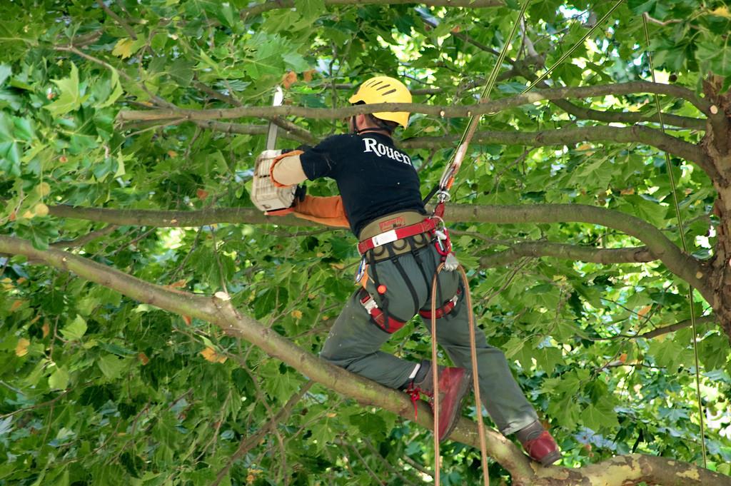 tailler et élaguer un arbre