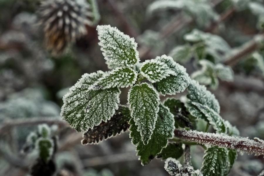 plante jardin hiver