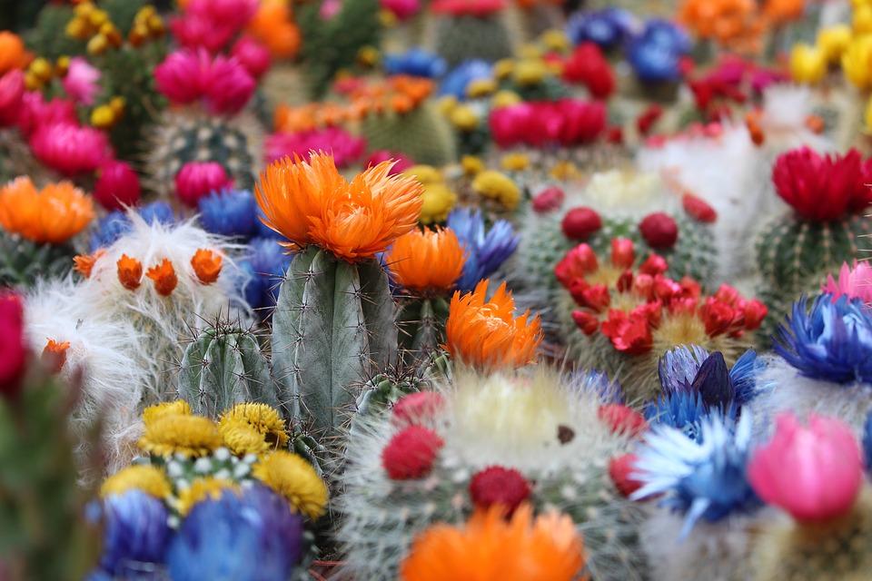 Prendre soin des cactus : conseils complets pour planter et entretenir