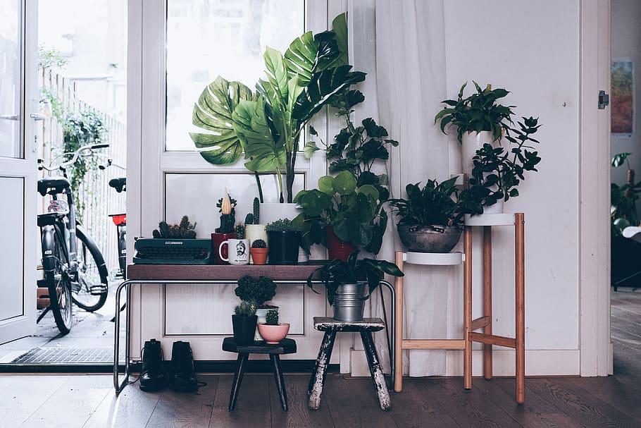 intérieur-déco-jungle