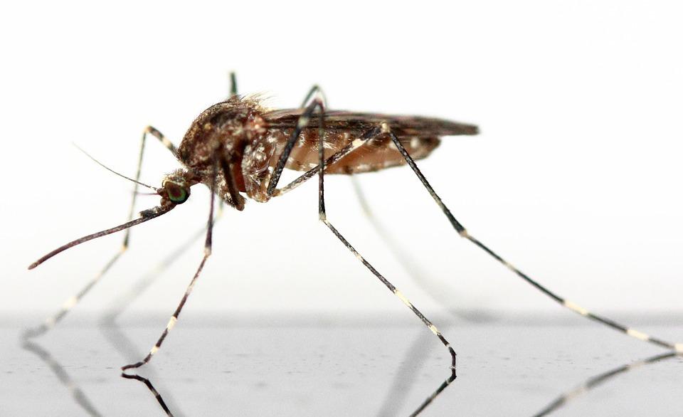 Comment se débarrasser des moustiques ?