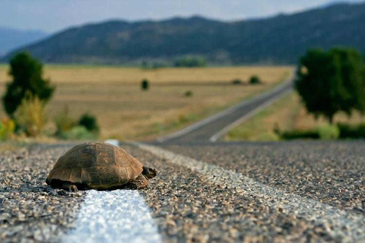 Impact des routes et du trafic routier sur les petits mammifères