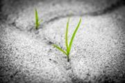 Comment désherber son jardin sans produit chimique ?