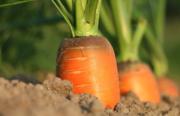 L'échange de graines pour l'agriculture Bio en plein essor
