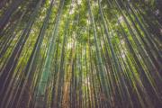 Comment faire du thé Pu-erh au bambou ?