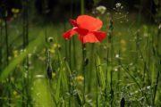 Pour un jardin plus « vert », optez pour un paysagiste écoresponsable